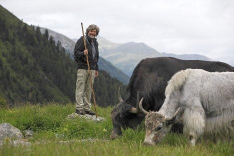 Reinhold-Messner-Yak