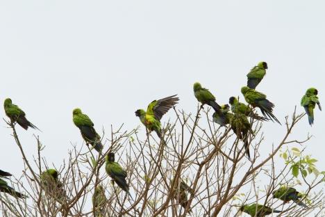 CO_Pantanal1203